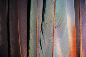 Feathers | sacred tools | healing tools | Sacred Center Mystery School | Warwick, NY